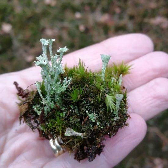 micro mossen op een hand